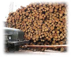 Фумигация и обеззараживание древесины